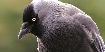 Vogelwering - Vogeloverlast - vogels