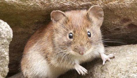 De muizen komen eraan